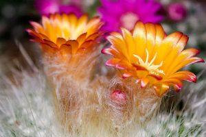 Flor de cactus: explorando el desierto de Tucson y cocina inspirada en la región