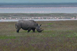 Tanzania: en busca de las misteriosas bestias del Ngorongoro