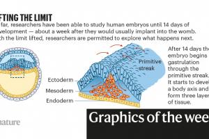 Derribando benceno, embriones cultivados en laboratorio: la semana en infografías